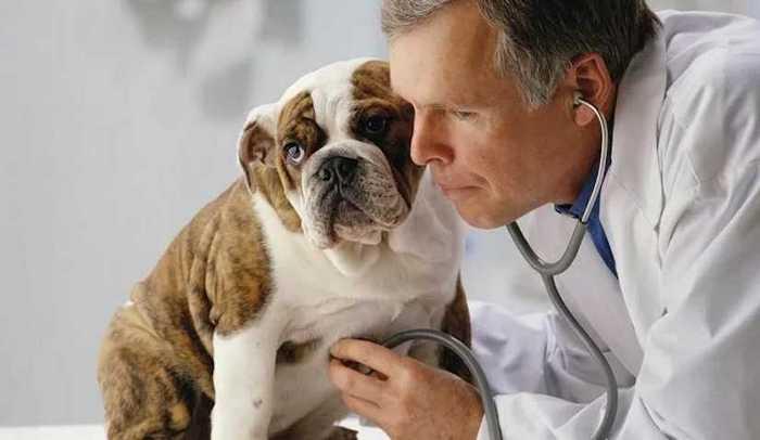 осмотр у ветеринара