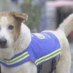 Бездомные собаки помогают полицейским