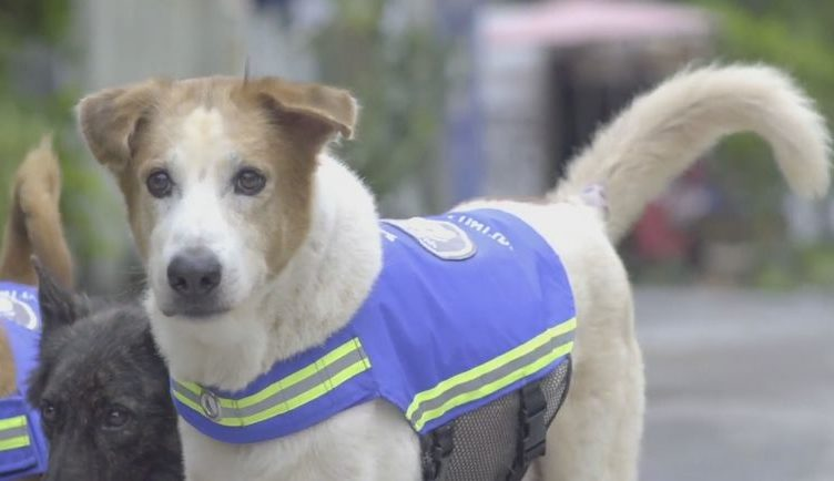бездомные собаки помогают полицейским в Тайланде
