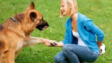 понимает ли собака речь человека