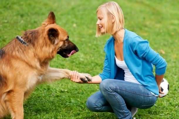 Собаки понимают человека!