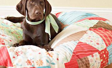 Сшить постель для собаки своими руками