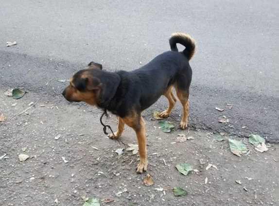потерявшаяся собака