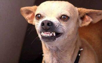 причины агрессии собак