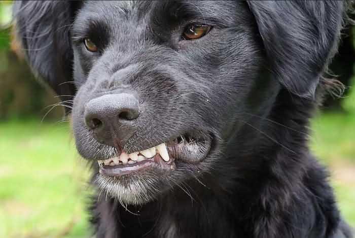 почему собака стала агрессивной
