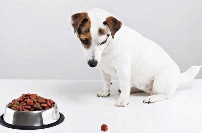 сухой корм для привередливых собак