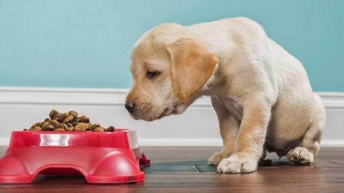 собака привередливая в еде