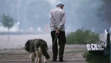 прогулка с собакой в карантин