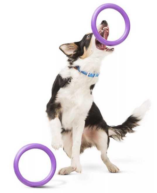 пуллер подарить собаке на Новый год