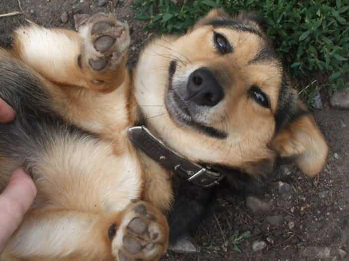 фото смешных собак