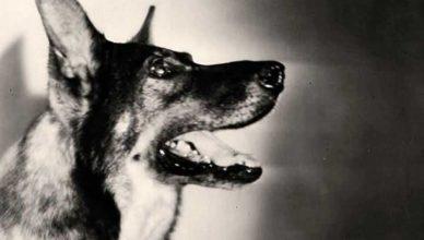 РинТин Тин собака герой спасла Голливуд