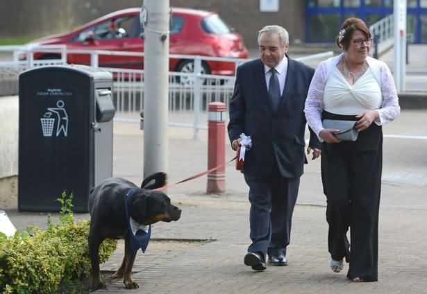 ротвейлер Джек гуляет с новой семьей