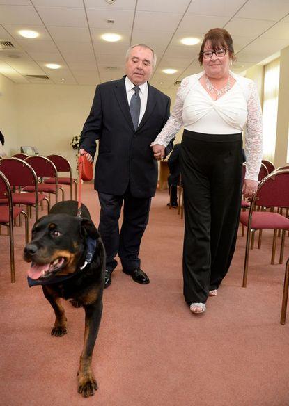 ротвейлер джек и жених с невестой