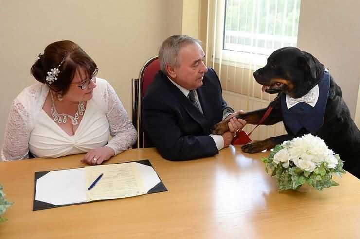 ротвейлер Джек стал свидетелем на свадьбе своих хозяев