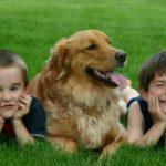 Самые дружелюбные собаки – наш ТОП-10