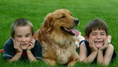 самая дружелюбная собака