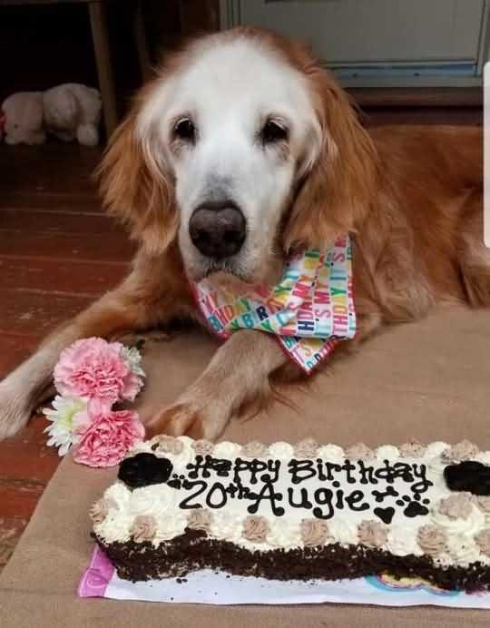 собаке исполнилось 20 лет
