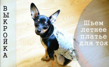 Как сшить летнее платье для собаки породы той-терьер