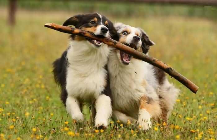 щенки играют