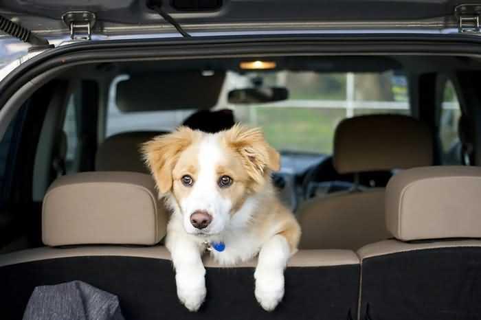 щенок в автомобиле
