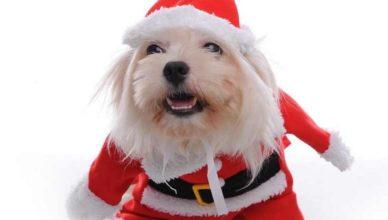 Смешной костюм для собаки на Новый год своими руками