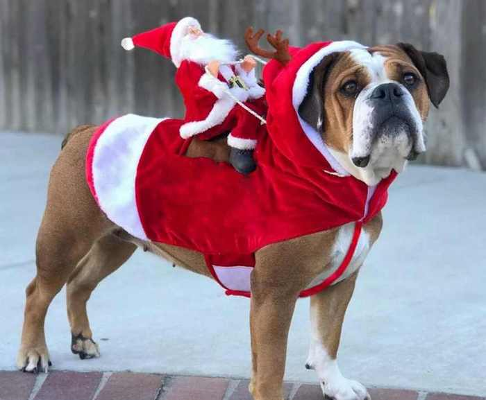смешной костюм для собаки на новый год