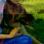 Пес спас хозяйку от эпилепсии