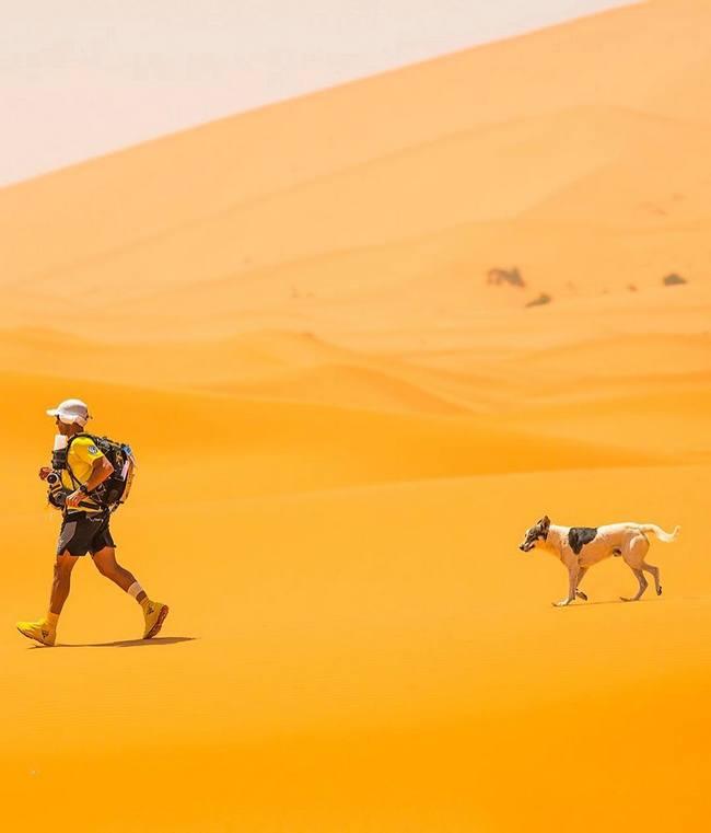 собака Кактус проходит этап  марафона в Сахаре
