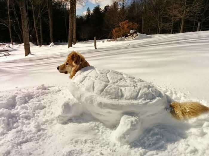 собаку зарыли в снег
