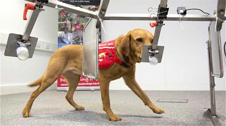 собак обучают диагностировать рак