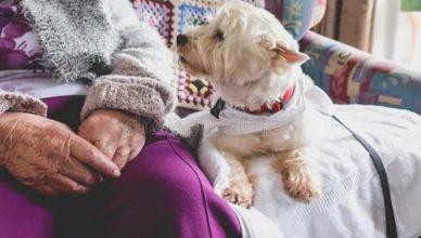 идеальные породы собак для пожилых людей