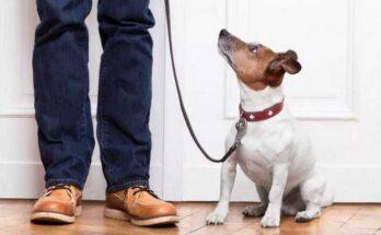 снимать ли ошейник с собаки дома