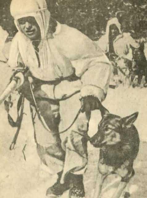 собака герой овчарка диверсант Дина Великая Отечественная война