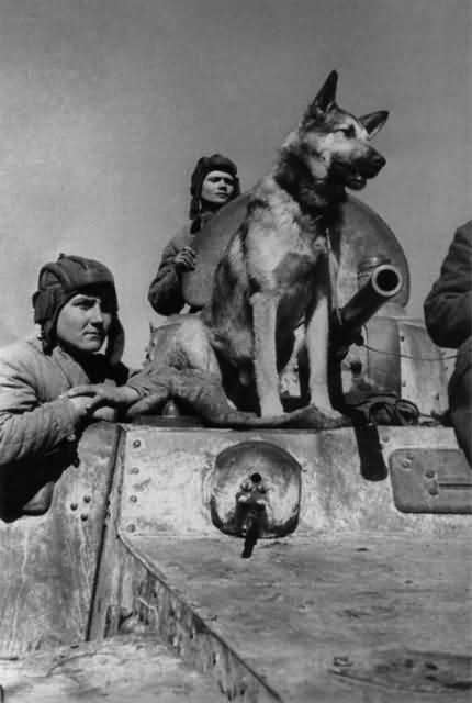 собака герой Джульбарс Великая Отечественная война