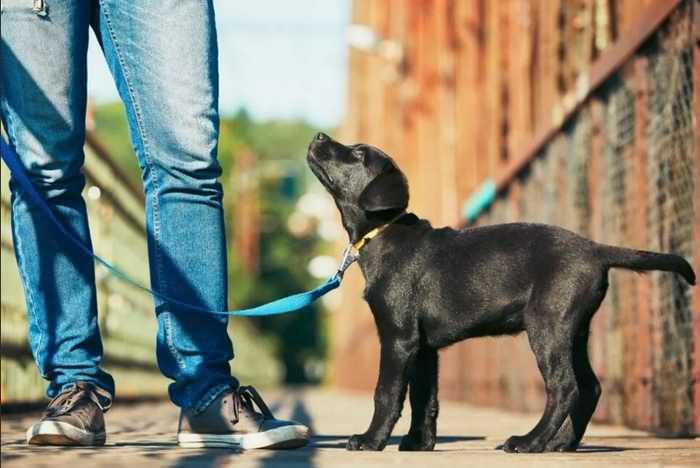 собака на прогулке откликается на свою кличку