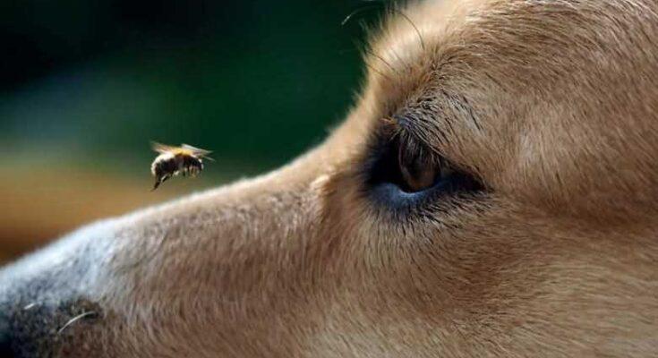 собака ест мух