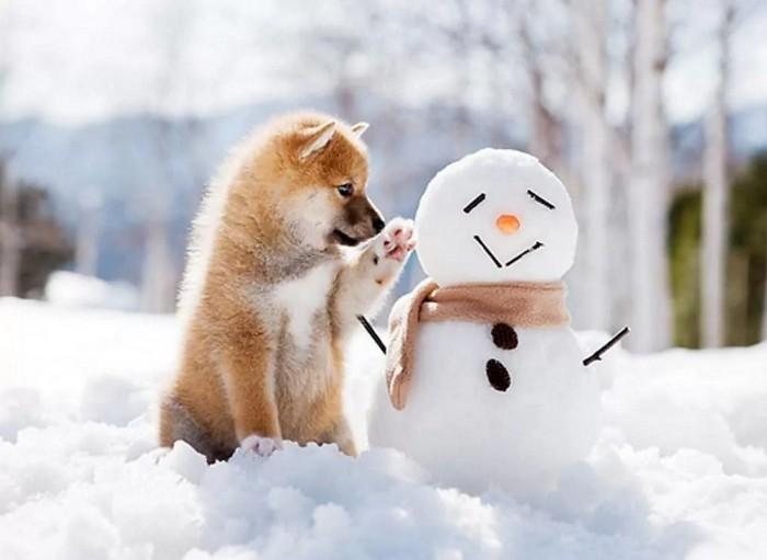 собака играет со снеговиком