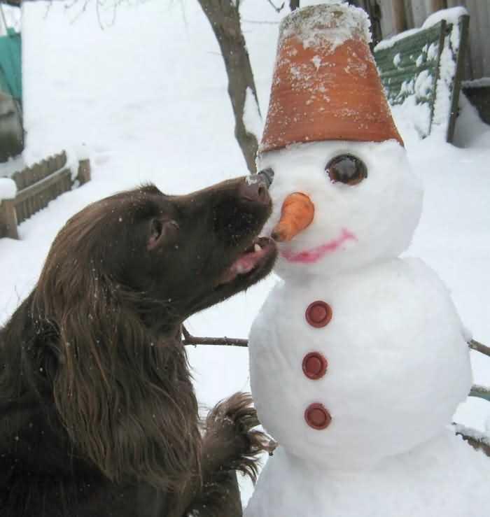 Как играть с собакой зимой на улице в снегу