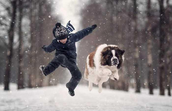игры с собаками зимой в снегу