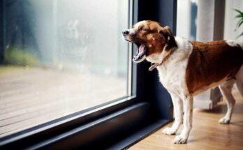 как отучить собаку лаять на гостей
