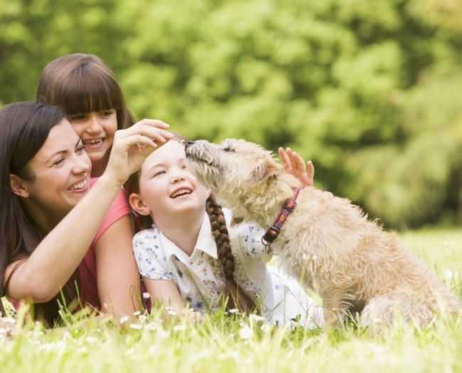 собака любит свою семью