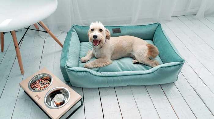 собака не лает, лежит на лежанке
