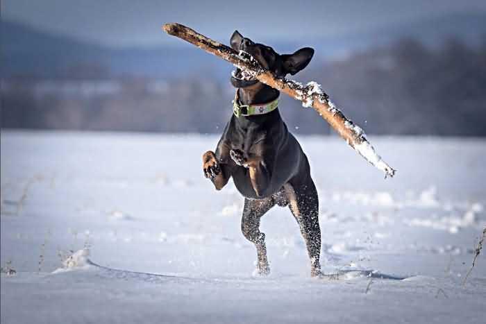 зимние игры с собакой