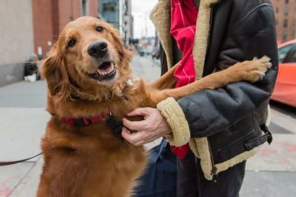 собака любит обниматься