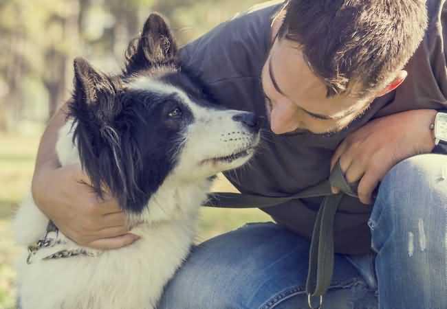 собака общается с хозяином