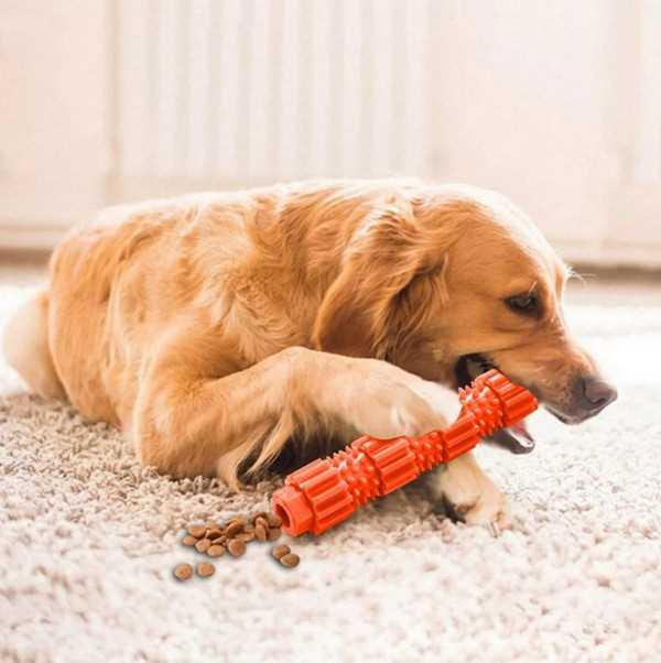 дайте собаке игрушку, и она перестанет лаять на гостей