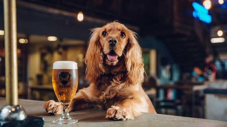 можно ли собакам пиво - новая марка собачьего пива