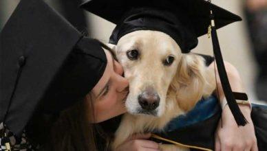 Собака-поводырь получила диплом высшего образования