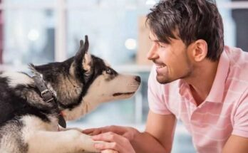 собака реагирует на свою кличку