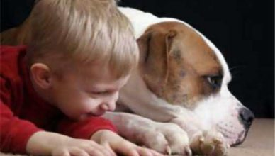 Собака спасла ребенка мальчика